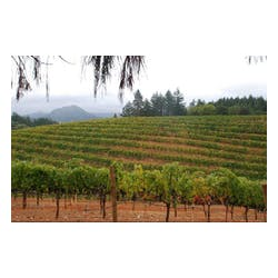 Four Vines