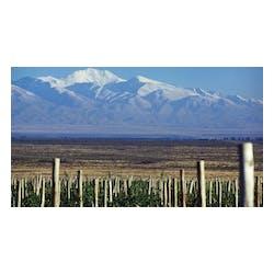 Alta Vista Wines