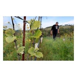 E&M Berger Winery