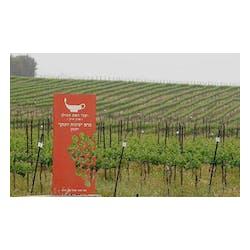 Yarden Wines