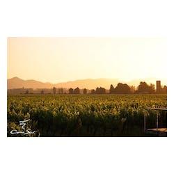 Cono Sur Vineyards