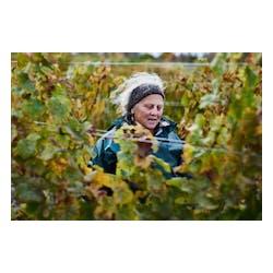 Bloomer Creek Vineyard
