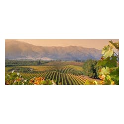Santa Carolina Wines