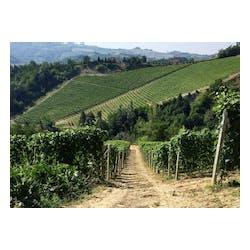 Seghesio Wines