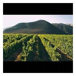 Lander Jenkins Vineyards