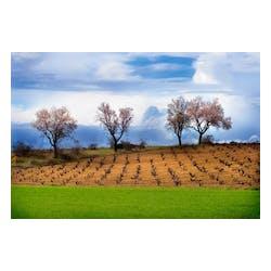Creta Winery
