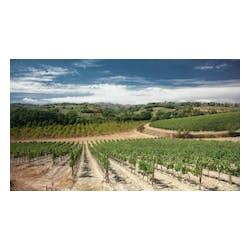 Dei Winery