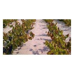 Pala Family Vineyards