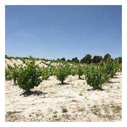 Bodegas El Nido Winery