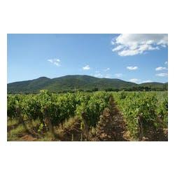 Prelius Vineyards