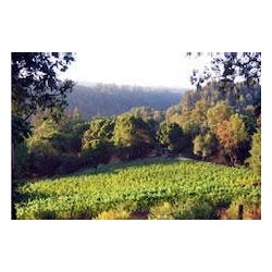 Santa Cruz Mnts Vineyard